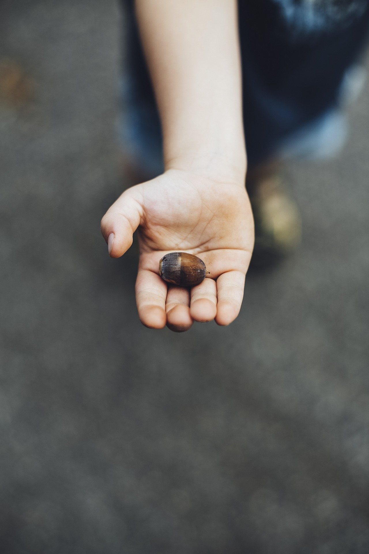 Kinderhand mit Kastanie